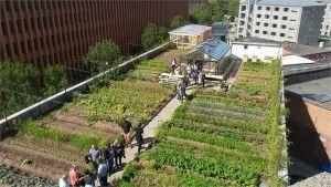 Agricultura urbana en Copenhague