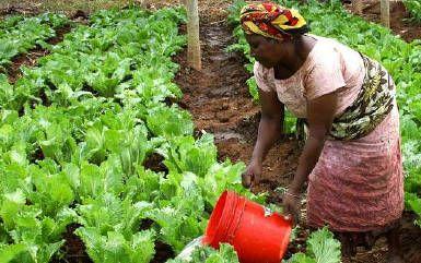 Mujer regando huerto