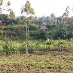 Campos de Cultivo Mahagi-RDCongo1