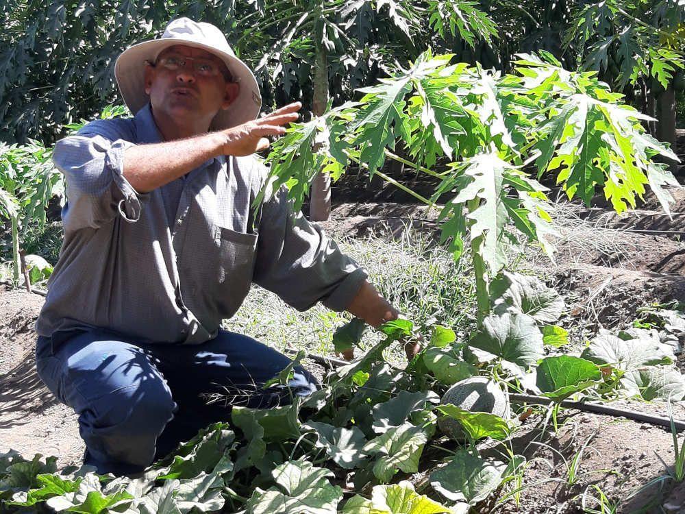 José Benítez retornó a El Salvador y apostó por impulsar la agricultura escalonada donde combina la producción de frutas y hortalizas en sistemas agroecológicos, en San Miguel (El Salvador).