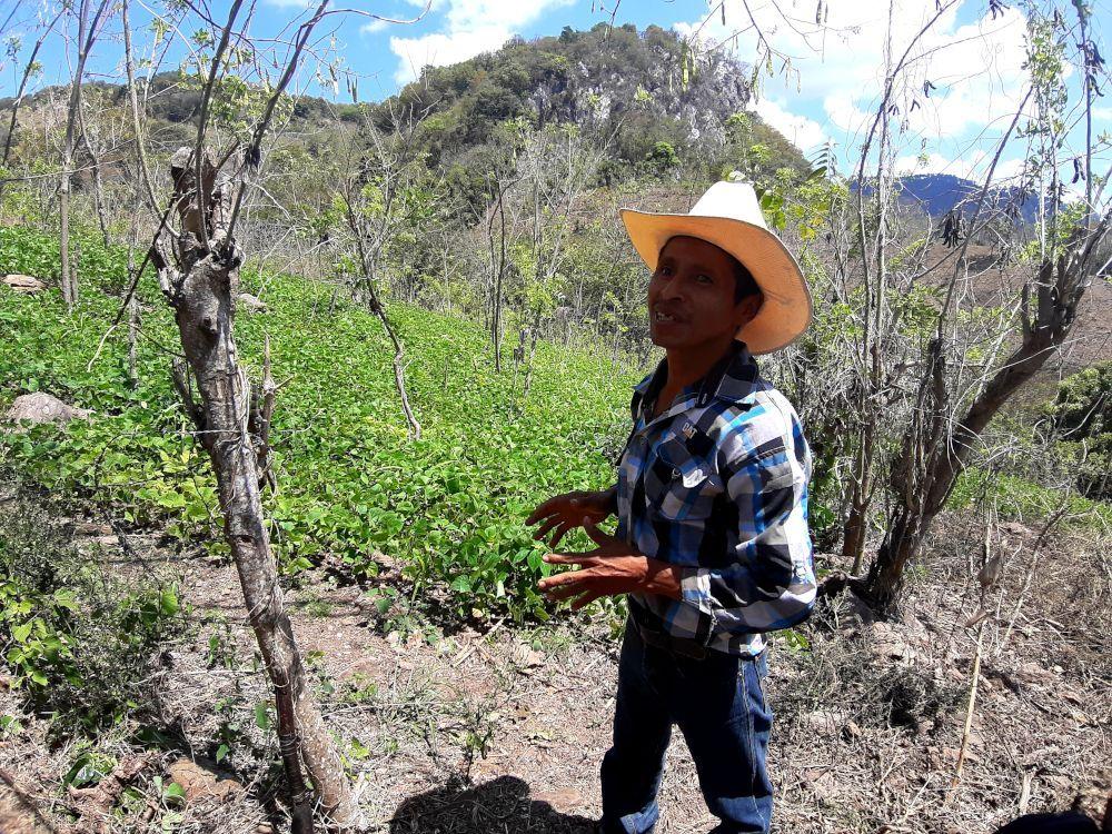"Lucas Aldana, un agricultor familiar de Camotán, en Guatemala, que práctica el sistema agroforestal ""kuxu rum"""